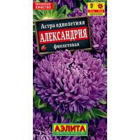 Астра Александрия фиолетовая --- Одн