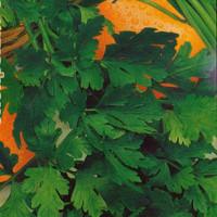 Петрушка Душистая листовая Арт. 5408 | Семена