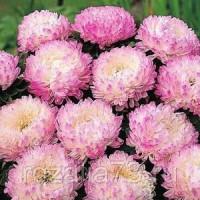 Астра Василиса пионовидная (розовая) Арт. 5671 | Семена