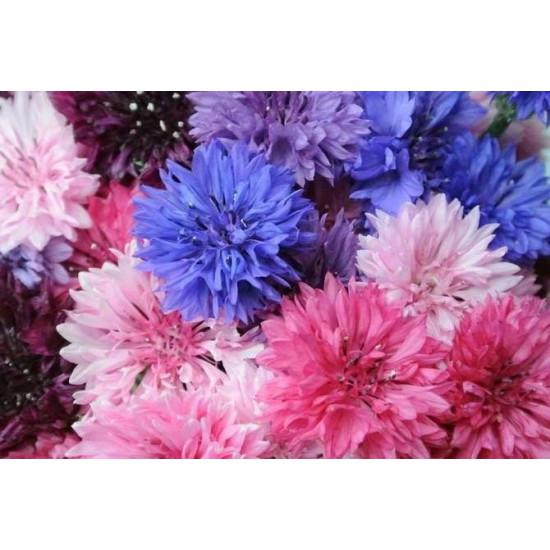 Василек Раннецветущий махровый смесь Арт. 5482 | Семена