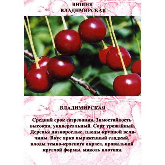 Вишня Владимирская Поздняя