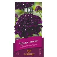 Скабиоза Чёрное манто пурпурная ( Г )